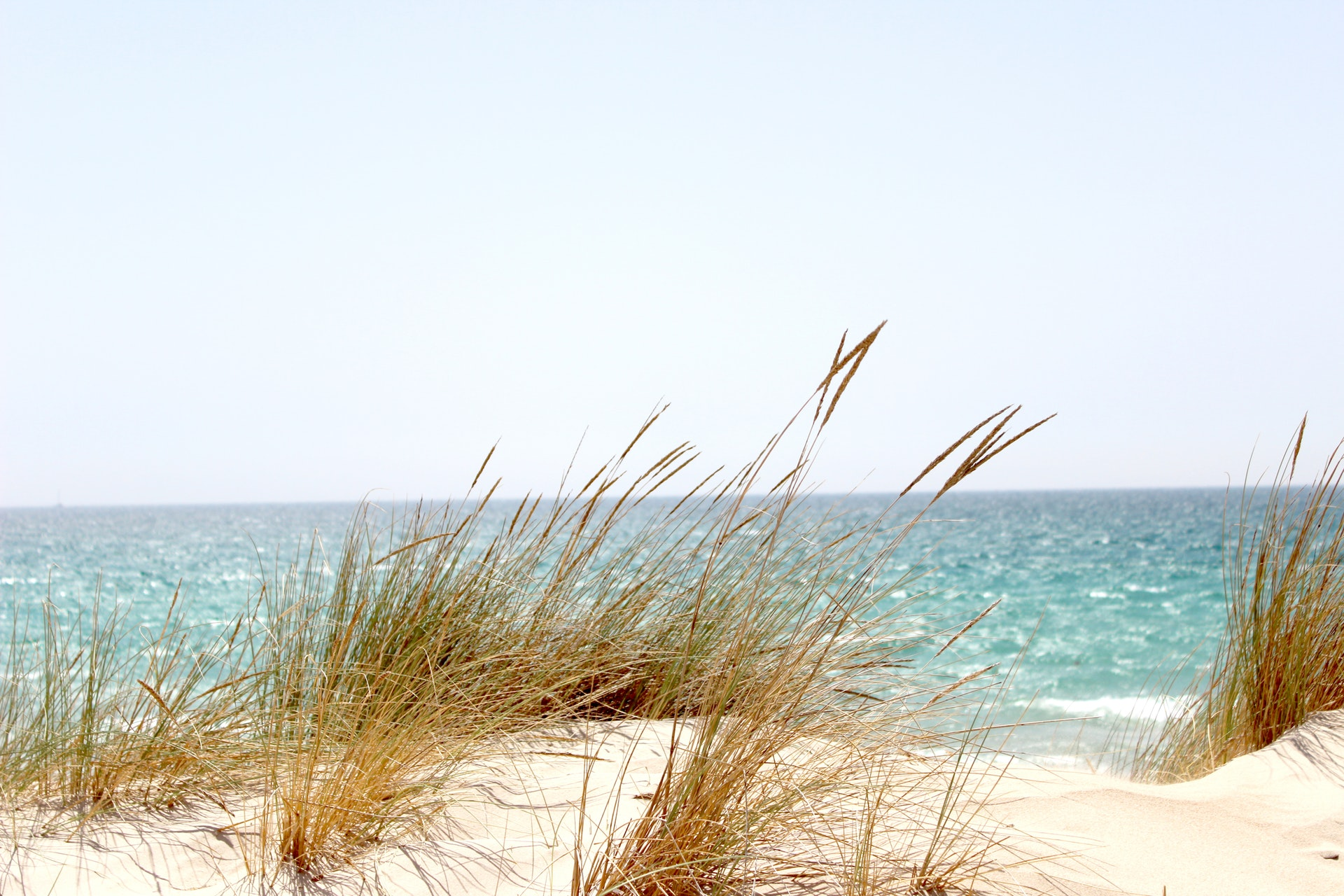 sea oats in Mexico Beach, FL